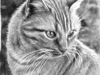 3-cat-drawing