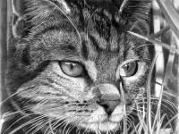6-cat-drawings