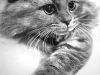 7-cat-drawings
