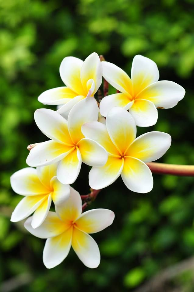 Beautiful white flowers mightylinksfo