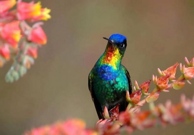 colorful bird photo