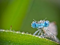 insects macro photography