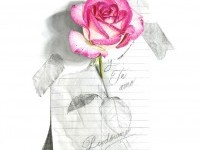 rose flower drawings by abraham falcon