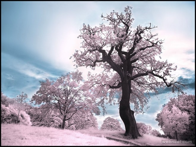 infrared photography by michilauke