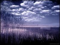 37-infrared-photography-bymichilauke