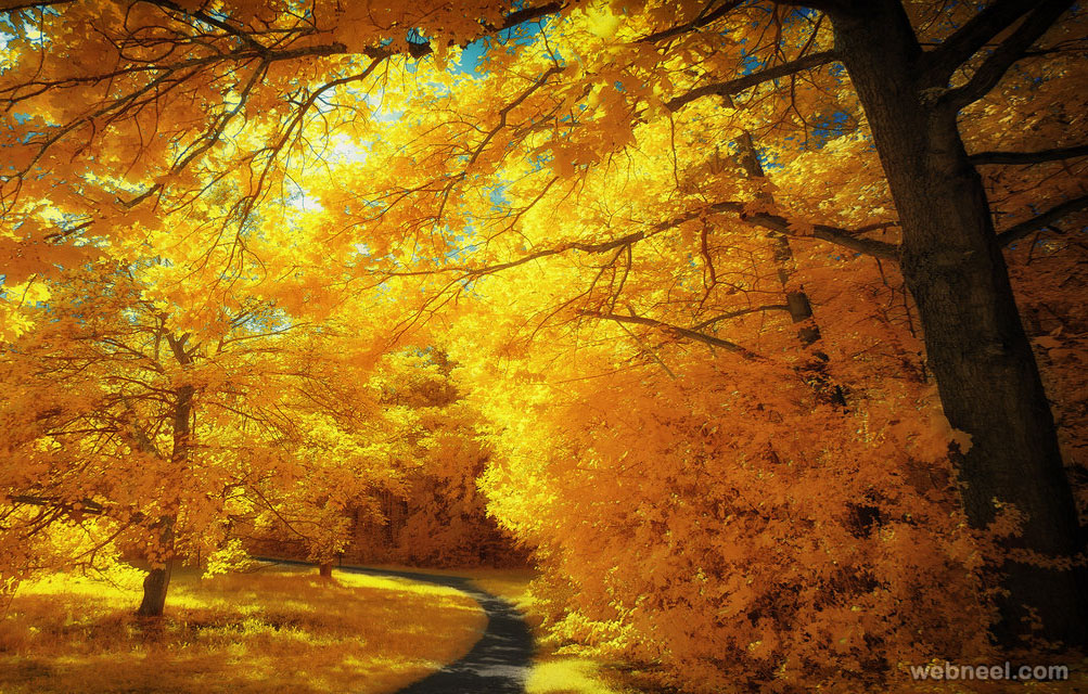yellow trees infrared photography by myinqi