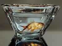 12-fish-hyper-realistic-painting-by-youngsungkim