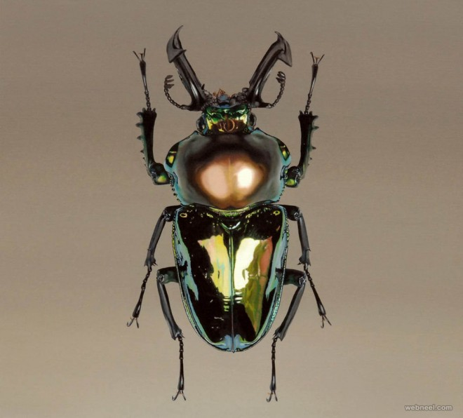 beetle hyper realistic painting