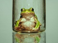 18-frog-reflection-hyper-realistic-painting-by-youngsungkim