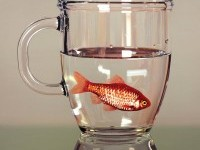 4-fish-in-mug-hyper-realistic-painting-by-young-sung-kim