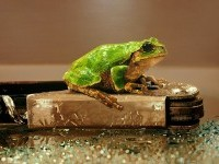 7-frog-hyper-realistic-painting-by-youngsungkim