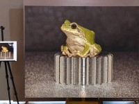 8-frog-hyper-realistic-painting-by-youngsungkim
