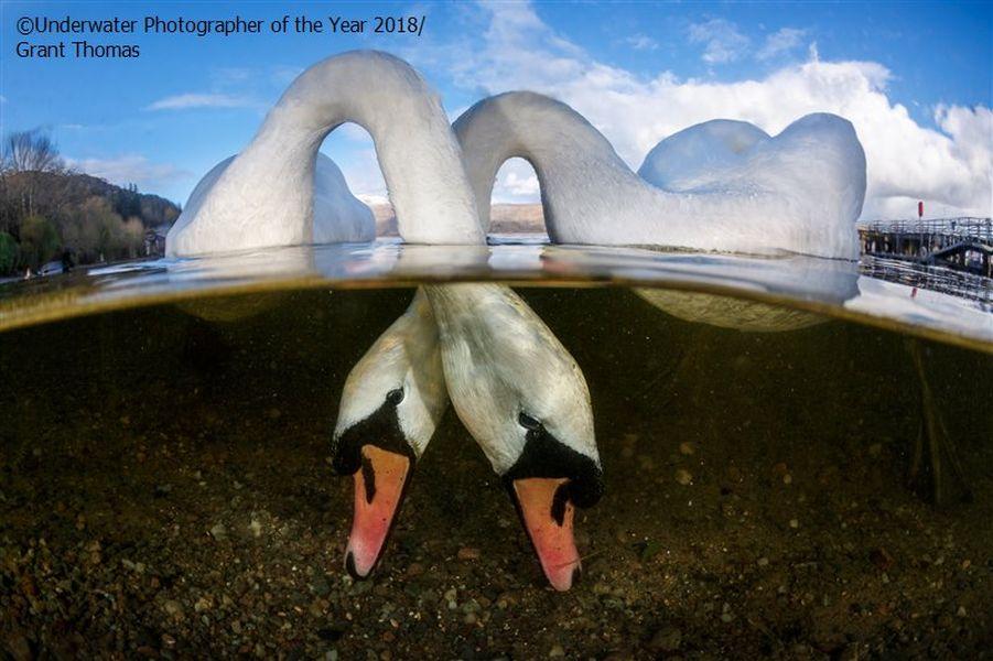 love birds underwater photography