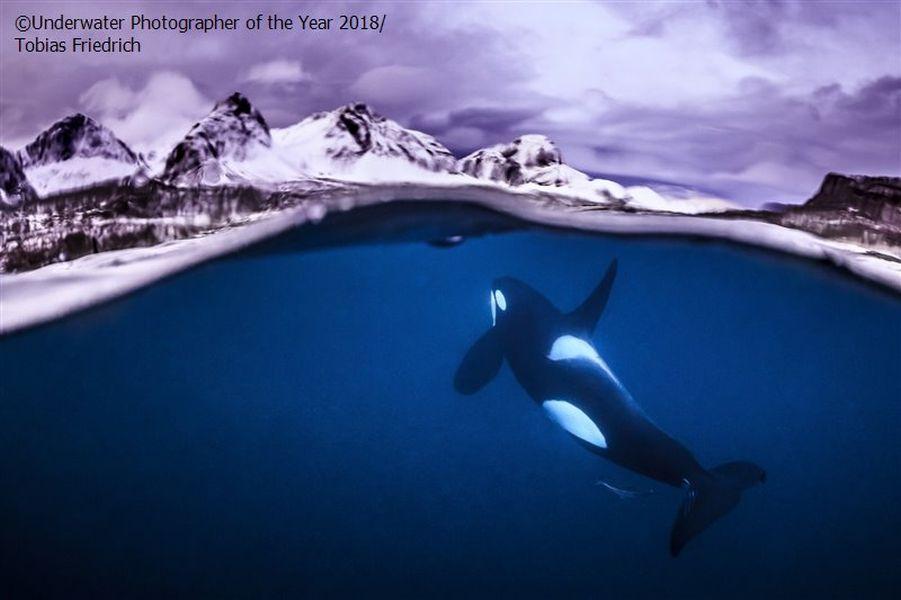 breathtaking underwater photography