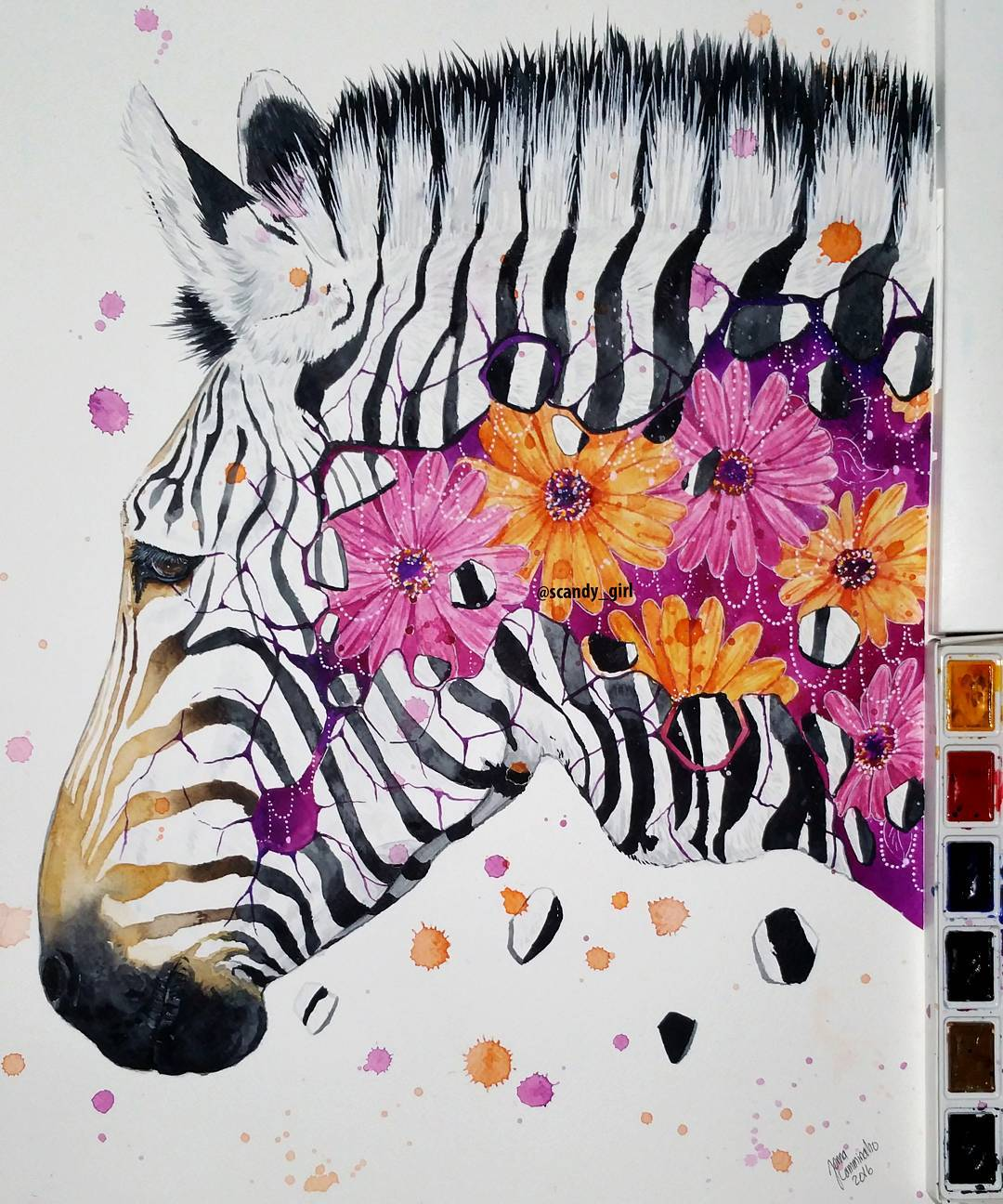 watercolor paintings zebra by jonna hyttinen