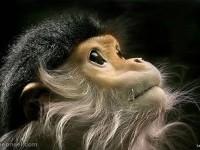11-chimpanzee-photography