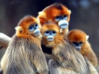 14-baboon-photography