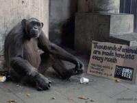 14-homeless-wild-animal-ad