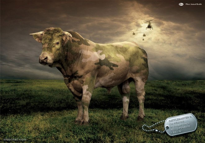 pfizer animal health cow ad
