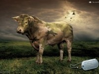 15-pfizer-animal-health-cow-ad