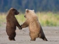 2-bear-photography