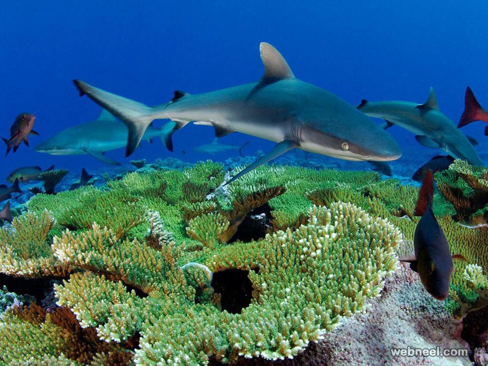 kingman reef skerry underwater photography