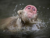 23-macaque-photography