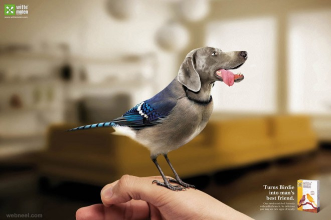 turns birds into mans best friend ad