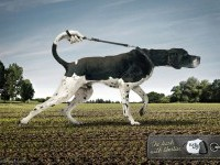 25-the-leach-with-liberties-animal-ad