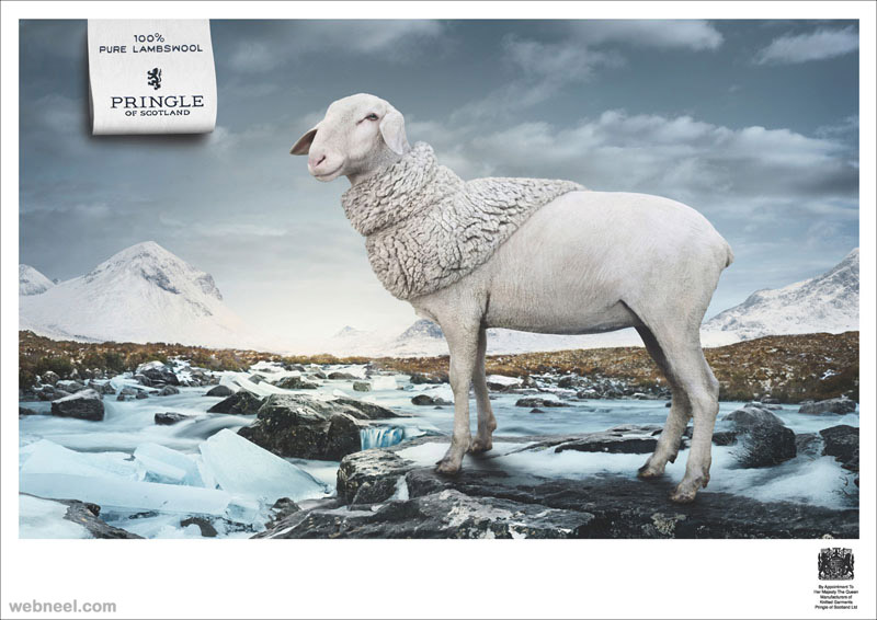 pure lambswool animal ad
