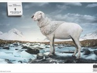 3-pure-lambswool-animal-ad