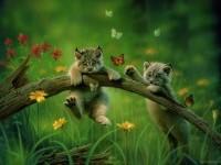 4-cat-fantasy-artwork