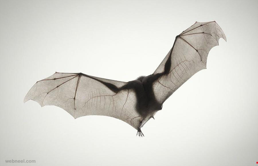 bat photography