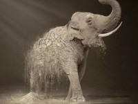 5-wwf-elephant-animal-ad