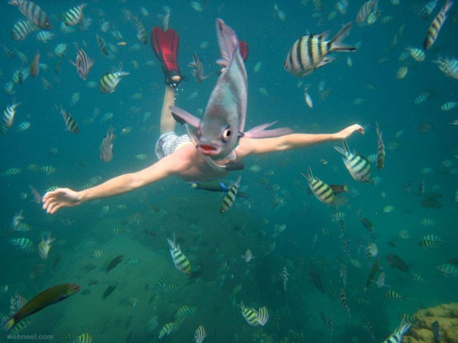 best underwater photography photo