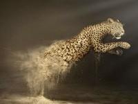 6-wwf-leopard-animal-ad