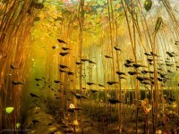 8-tadpoles-swamp-canada-underwater-photography