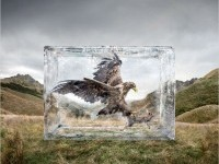 9-olympus-animal-ad