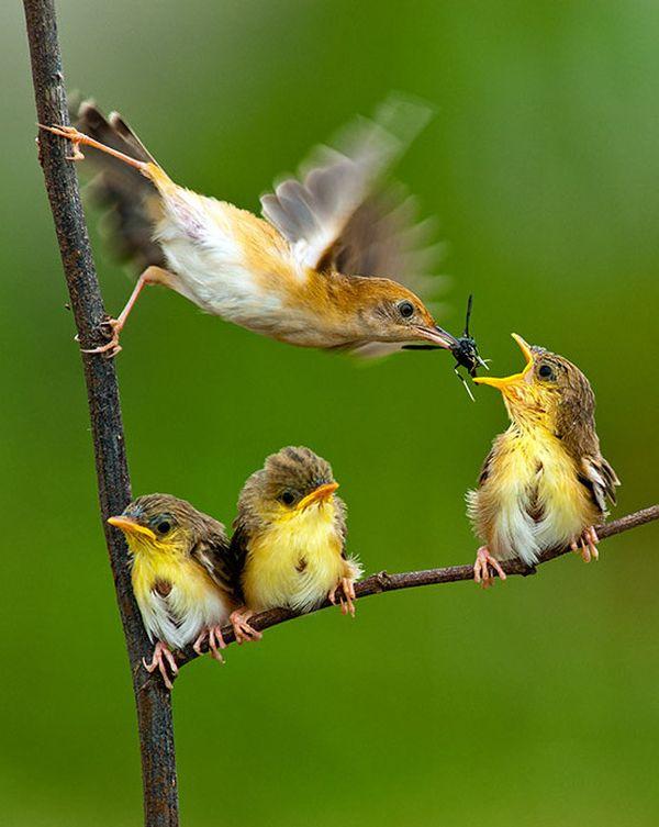 beautiful birds photo