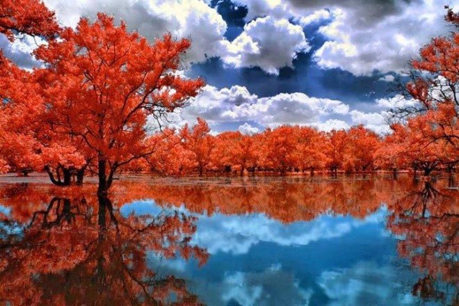 red tree amazing nature reflections