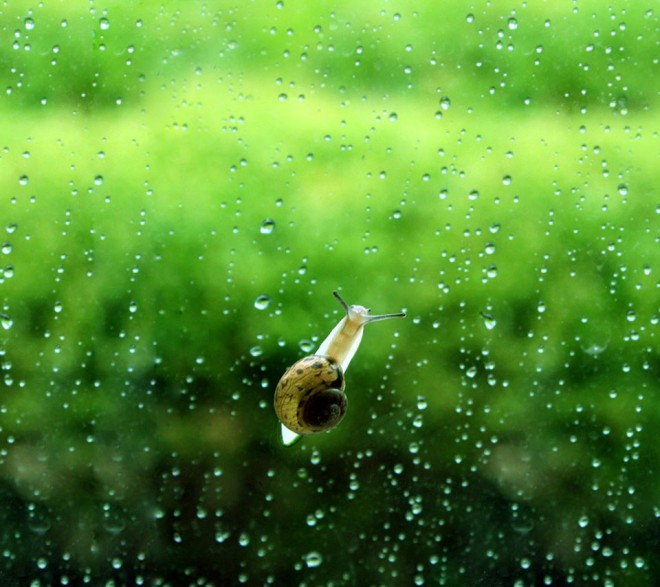 snail rain photo