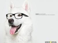 15-print-ads-optical