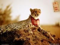 17-print-ads-animal-leopard