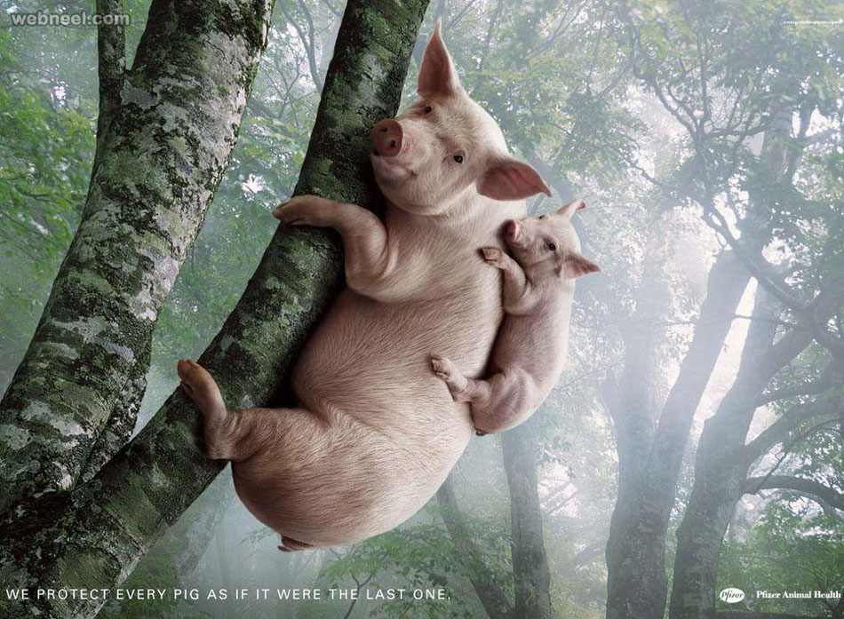 pfizer animal advertisment print ads