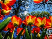 1-red-flower-photography-by-ni-fransico