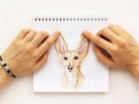 2-interactive-illustration-dog-drawing-idea-by-valerie-susik