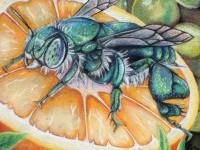 3-bee-on-orange-chalk-art-by-charfade