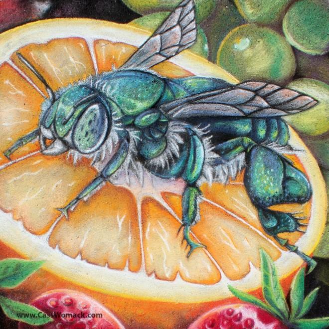 bee on orange chalk art by charfade