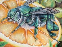 3-bee-on-orange-chalk-art-by-charfade