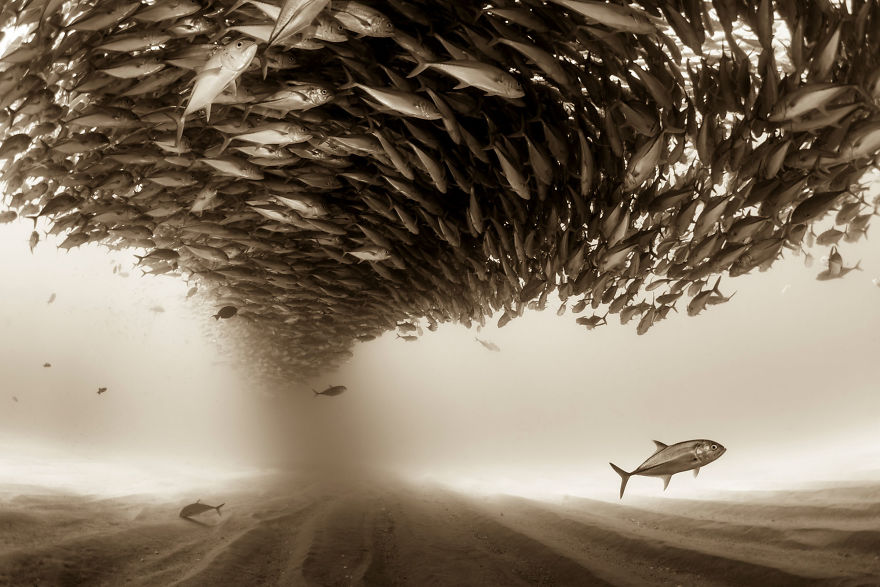 fishes sony award winning photography